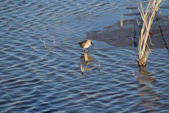 Murrells Inlet, Carolina del Sur: cute litle bird!!