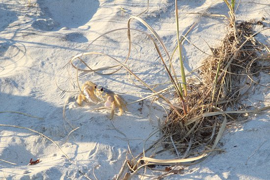 Murrells Inlet, SC: a crab just came out of its hole...!!
