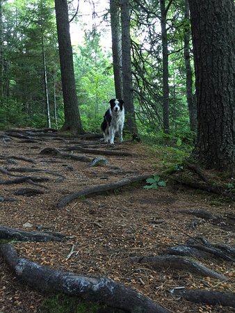 Sussex, Canada: be careful of the roots when walking...
