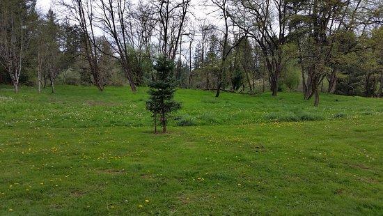Camas, Вашингтон: Large grassy areas