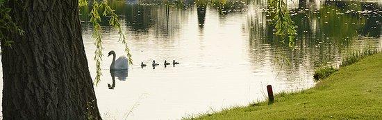 Mallemort, Fransa: L'un des 5 lacs avec ses cygnes