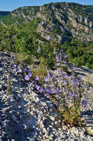 Skradin, Croacia: Chimney Bellflower