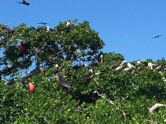 Yucatán, México: bird island