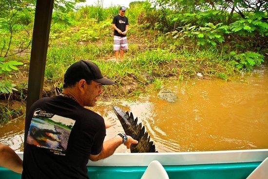 Tarcoles, Costa Rica: croc tour