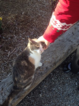 "Pleasanton, แคนซัส: very friendly cats -- this one ""Stripes"" helped us find the sidewalk when we arrived late"