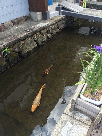 Hida, Japón: 乾淨的圳川