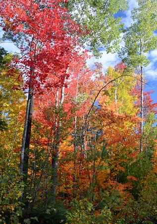 Patten, Мэн: October is fall foliage time, and leaf peepers are welcome in the area.