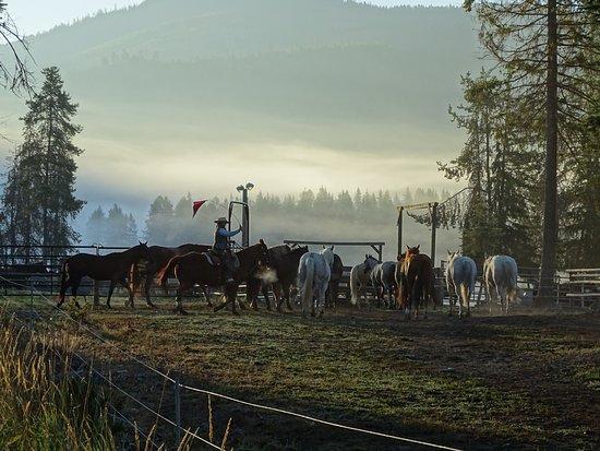 ลิบบี, มอนแทนา: A friend that I made during the stay gathering the horses at dawn.