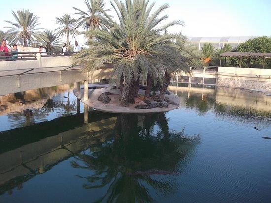 Midoun, Tunesië: Parc aux crocodiles .....les croco attendent l'heure du casse croûtes qui se déroulent vers 17 h