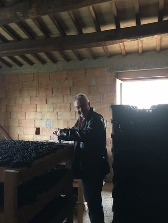 Montefalco, Italy: Mark showing us the grapes that are drying for passito