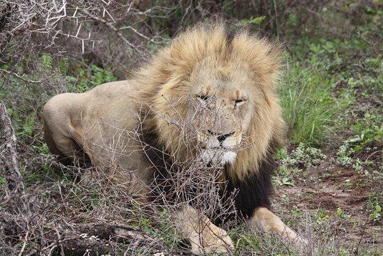 Kenton-on-Sea, South Africa: King of Kariega