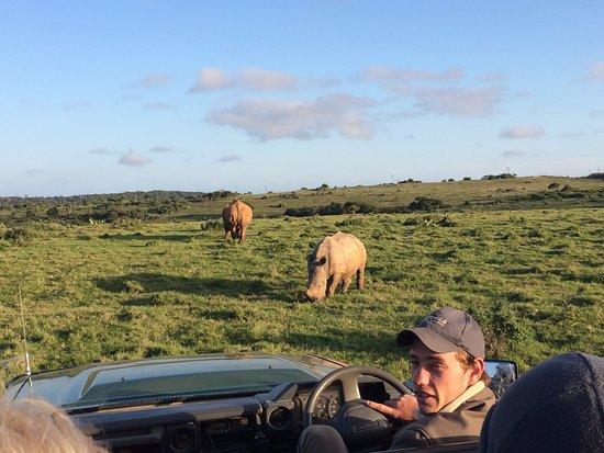 Kenton-on-Sea, Sydafrika: Our ranger, Allen. Plus white rhino's