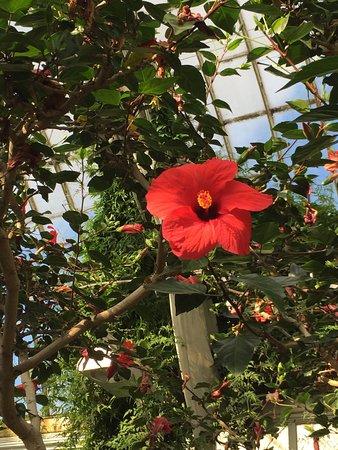 queste foto ritraggono un bellissimo pomeriggio di sole trascorso horticultural gardens tradgardsforeningen queste foto ritraggono un bellissimo pomeriggio di sole trascorso in