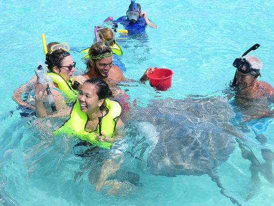 Moana Adventure Tours: Safari raies/requins