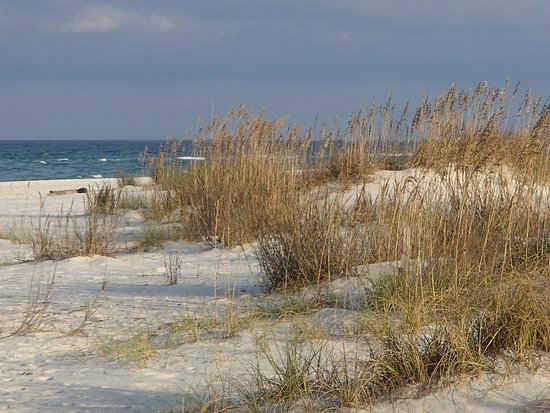 Port Saint Joe, FL: Sea oats on dunes at St. Joseph Peninsula State Park