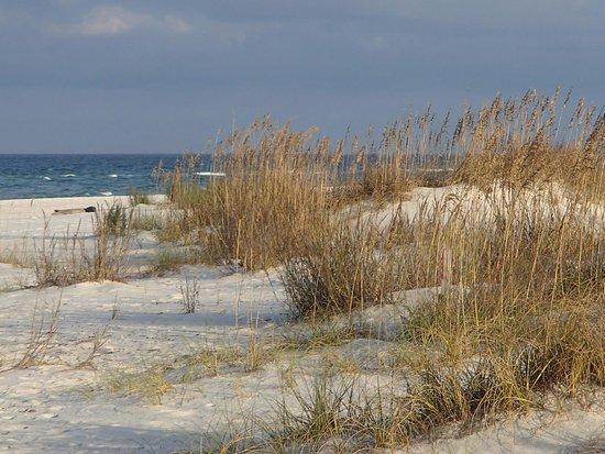 Port Saint Joe, Floryda: Sea oats on dunes at St. Joseph Peninsula State Park