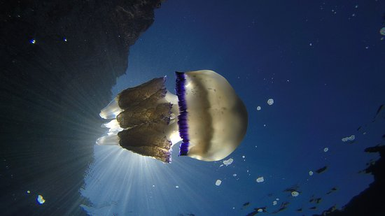 Przno, Montenegro: montenegro diving