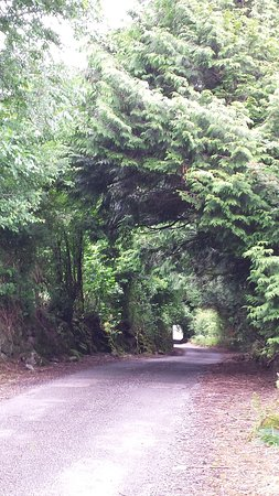 Ballymacarbry, Ireland: the way to the cottage