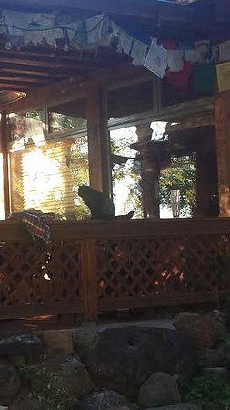 Boulder, UT: the curious case of the participatory cat