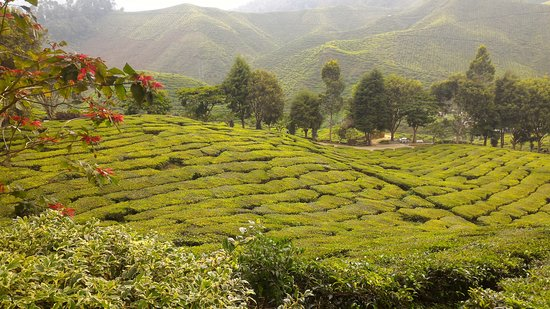 Tanah Rata, Malaysia: Cameron Bharat Tea Estate