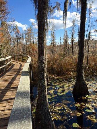 Grand Bay Wildlife Management Area照片