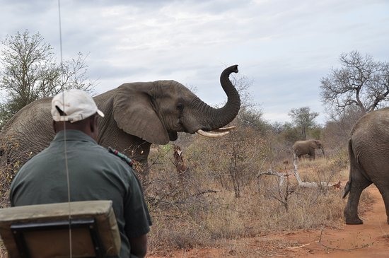 Garonga Safari Camp: game drive