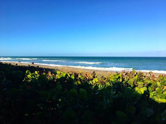 Jensen Beach, Φλόριντα: Ocean view from patio deck.
