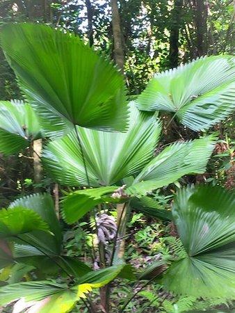 Papaikou, Havaí: Hawaii Tropical Botanical Garden
