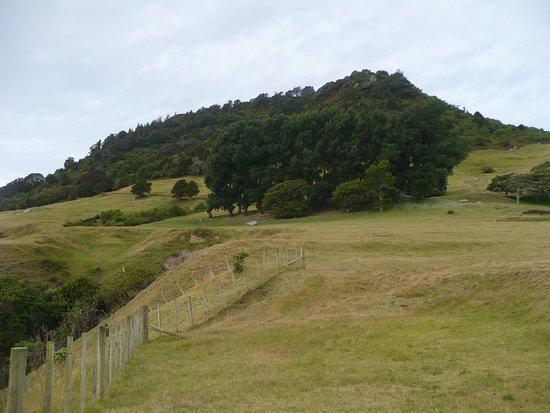 the mount maunganui summit