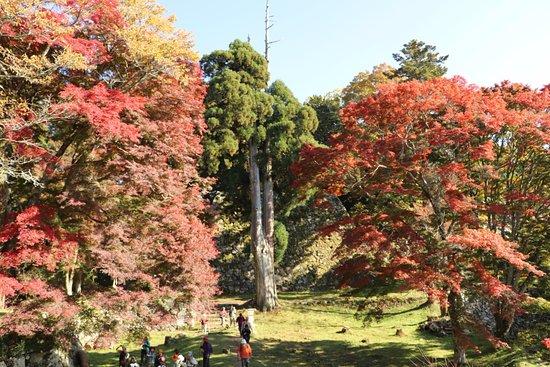 Takatori-cho, Japonia: 高取城跡