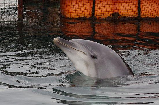 Iki Iruka Park: 可愛いイルカが出迎えてくれます