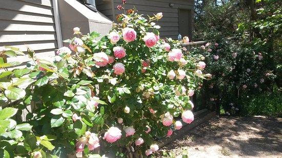 Rosebud, Australia: The Peninsula is spectacular in spring