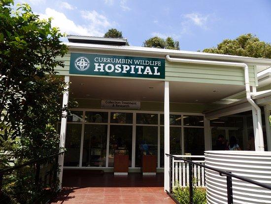 Currumbin, Australië: Wildlife Hospital