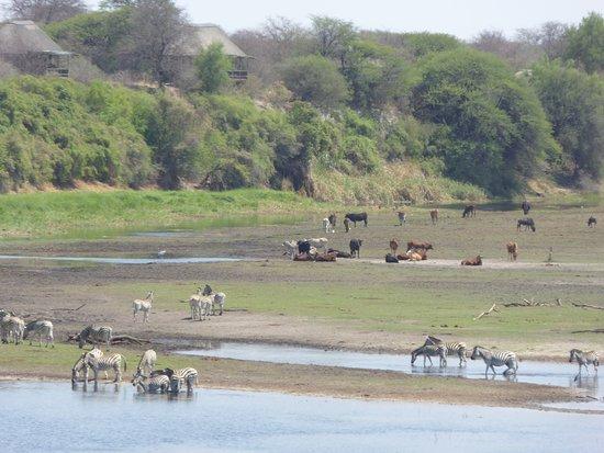 Makgadikgadi Pans National Park, Botswana : il letto del fiume Boteti
