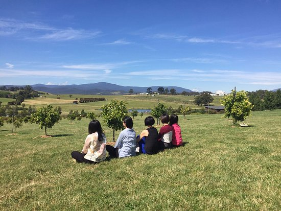 Yarra Glen, Australia: we rather spend time on the grass just outside the shop
