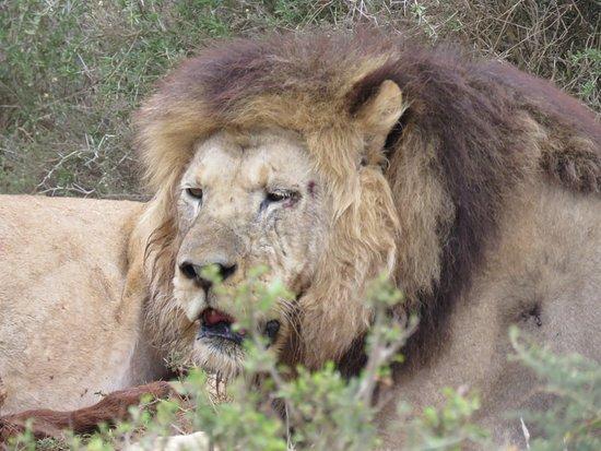 Addo Elephant National Park Resmi