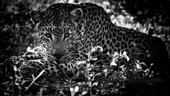 Klaserie Private Game Reserve, Sudáfrica: The Thomas Male