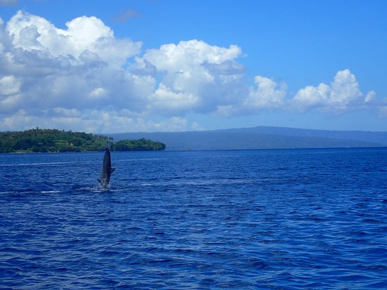 Kabaira Dive & Tours Rabaul : photo3.jpg