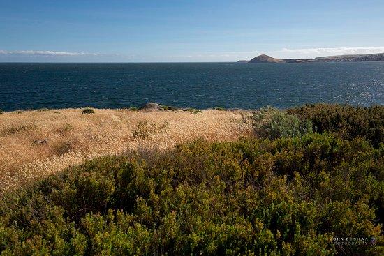 Victor Harbour, Australien: Along the path before Umbrella Rock.