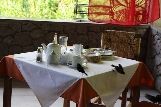 Papillote Rainforest Restaurant : Dining with the local birds