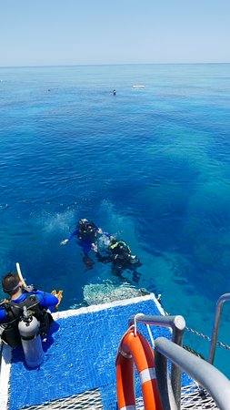 Reef Experience: Introductory diver and instructor.