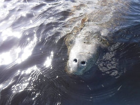 Manatee Guides