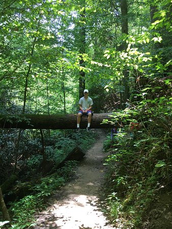 Slade, KY: Rock Bridge Trail