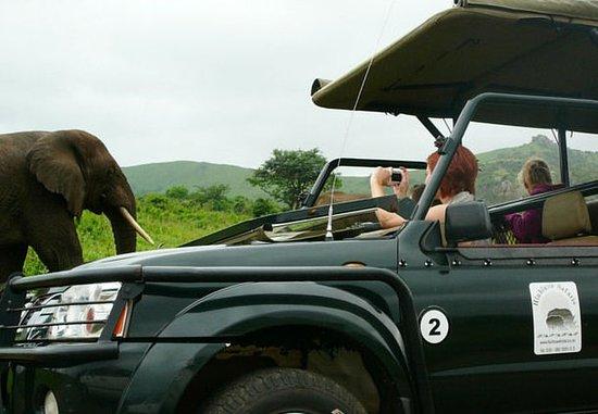 Hluhluwe, Νότια Αφρική: Safari