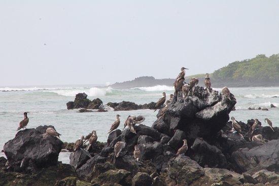 Puerto Villamil, Ισημερινός: photo2.jpg