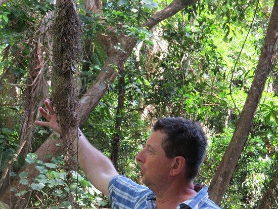 Daintree, Australia: Murray showing us an old nest of an Olive-backed Sunbird