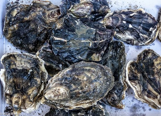 The Cruel Sea Bar: Oysters came all cleaned and ready to shuck