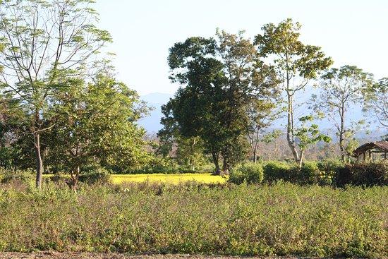 Nameri National Park, Hindistan: resort grounds