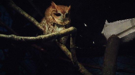 Ньюпорт-Ньюс, Вирджиния: Owl