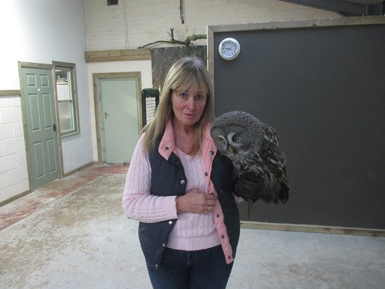 Wem, UK: Beautiful Bert, the Great Grey owl